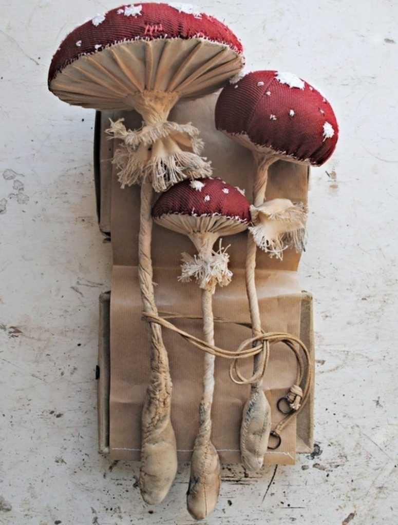 грибы фото для вырезания всегда